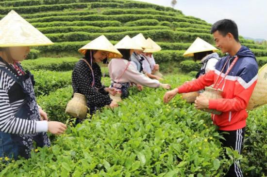 丹寨扶贫茶园启动仪式暨万达义工活动在丹寨举行