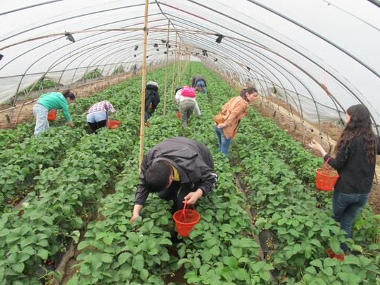 宜昌万达影城组织员工农场义工活动 提升凝聚力