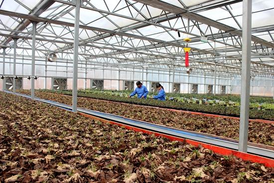 """丹寨""""绿海蓝星""""园区:绿了荒山 壮了企业 致富农家"""