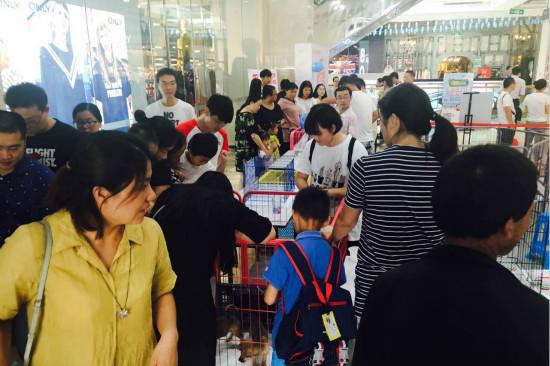 太仓万达广场举办流浪犬领养公益活动