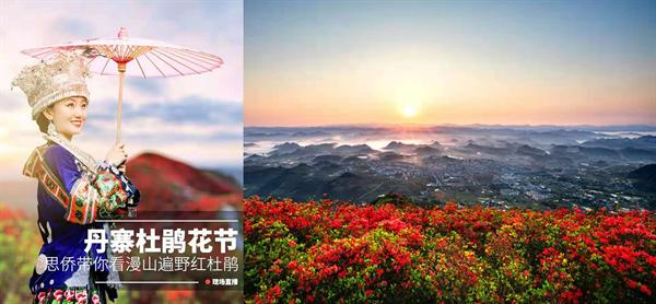 龙泉山万亩杜鹃花海全天直播预热丹寨杜鹃花旅游节